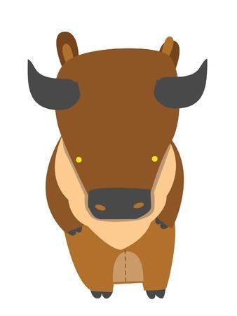 american bison: buffalo