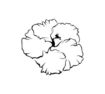 Hisbicus Flower Illustration