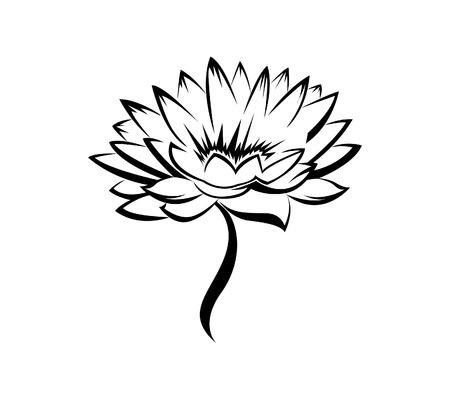lotus flower: Lily Flower