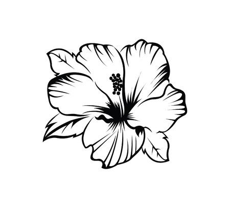 fiori di ibisco: Fiori di ibisco Vettoriali