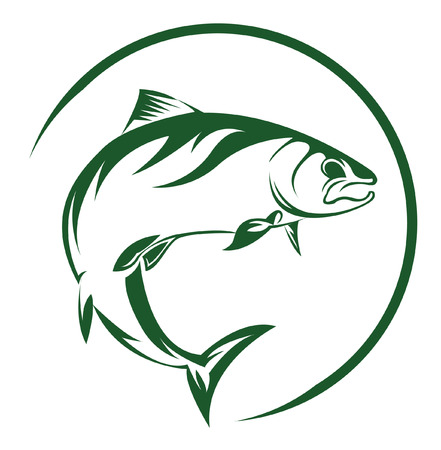 white salmon river: Salmon Fish Illustration