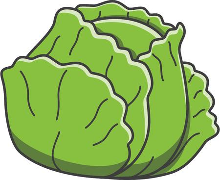 napa: Cabbage Illustration