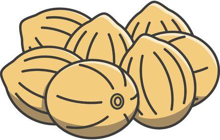 coriander: coriander