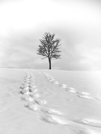 wintery day: lonely tree
