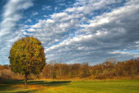 tree on a field in autumn