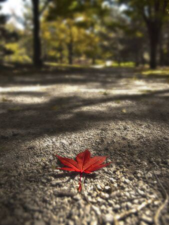 red leaf on path Stock Photo