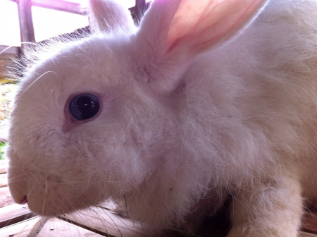 otganimalpets01: white rabbit