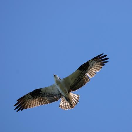 visibility: eagle