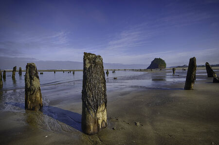 subduction: Ghost Forest at in Cascadia  Stock Photo