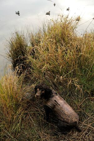 Dawn at a Duck Lake with Boykin Spaniel