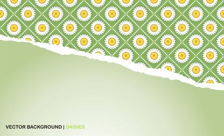 background with torn paper and camomiles Vector