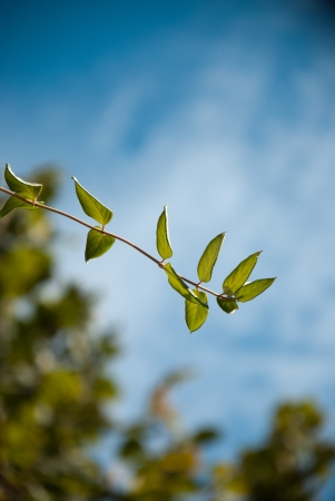 Plant leaves with beautiful clouds on the back Stock Photo - 15734974