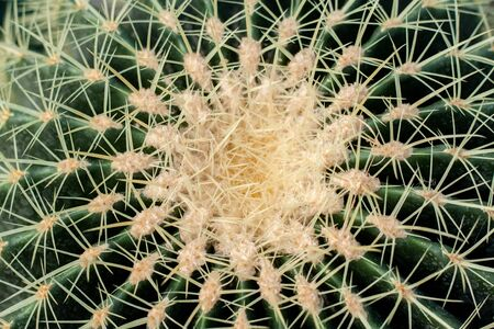 Thorns serve as protection against animal ingestion, from the scorching sun, heat and cold. In addition, they are able to absorb water. This spike function has become especially important for some cacti. In places where it has not rained for years and fog is the only source of moisture, cacti have learned to use thorns for water supply very efficiently.