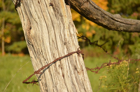 amish: Rusty barbed wire on Country fence
