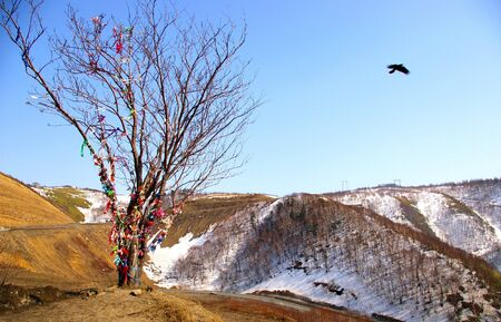 sakhalin: The Tree of Happiness.The Mountain landscape. Kholmskiy mouting pass on island Sakhalin. The traditional Tree of Happiness costs On top. This is a nacked tree, on which people hang the varicoloured tapes, bows. Stock Photo