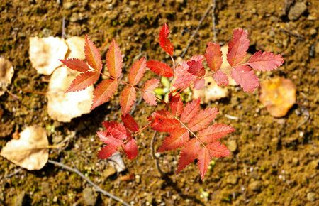 rowanberry: The Sprout of rowanberry by autumn.