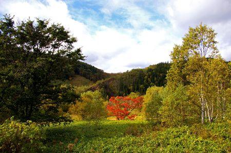 varicoloured: El paisaje de oto�o. El �rbol Varicoloured: rojo, verde, amarillo.