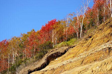 breakaway: The Bright autumn tree on breakaway. Stock Photo