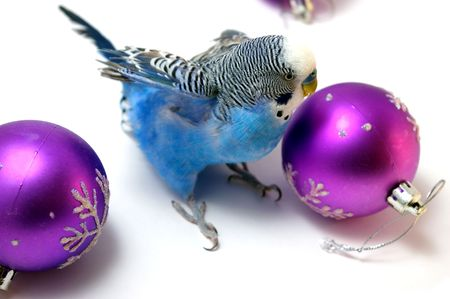 Parrot and fir tree new years balls photo