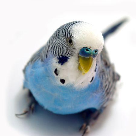 Parrot photo