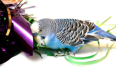 Blue parrot and tinsel from foil. Stock Photo
