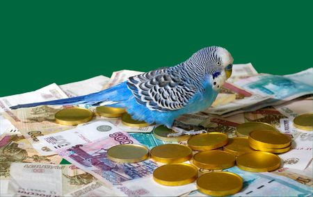 Blue wavy parrot and money on green background.