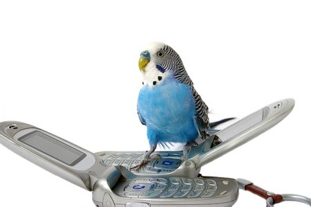 Blue wavy speaker parrot and telephones