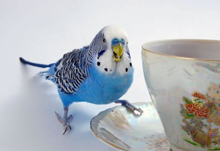 Parrot and cup  photo