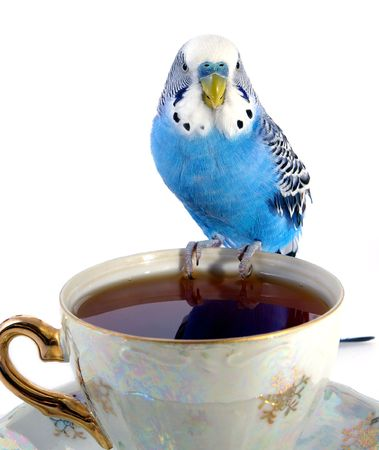 Parrot and cup with tea Stock Photo