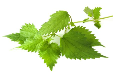 Sheet of young nettles on white background