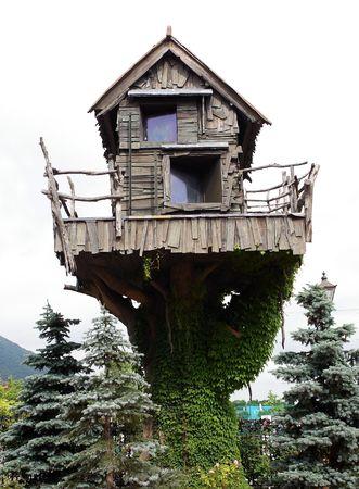 trunk  tree: Fant�stica casa peque�a en un tronco de �rbol, Linos una hiedra Foto de archivo