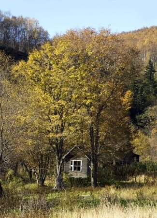Small house in autumn wood     photo