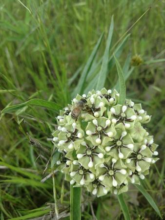 Bee collecting pollen Banco de Imagens