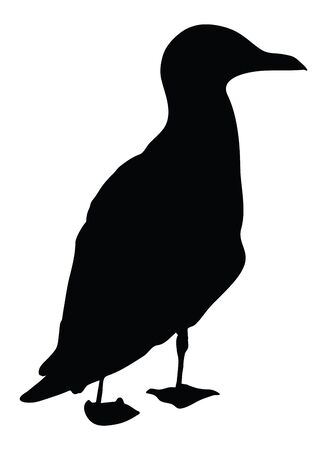 Sea bird Seagull. vector black and white illustration of a sitting bird.