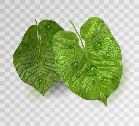 realistische tropische grüne blätter mit wassertropfen, tau. Vektor isoliertes Objekt auf weißem Hintergrund, Element für Design im 3D-Stil. Realismus. Vektorgrafiken.