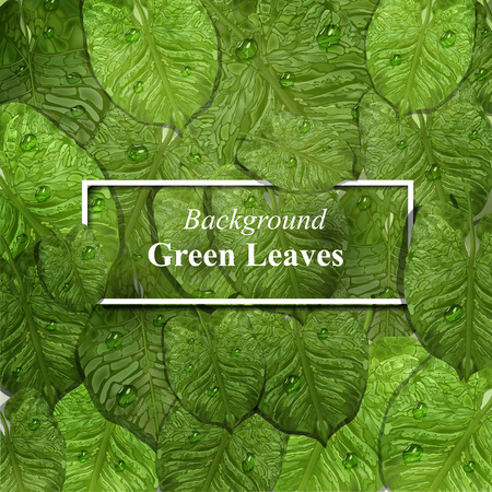 realistic tropical leaves with dew drops in 3d style. vector green background of tropical leaves with water drops with frame under text. leaf design elements, top view, close-up. vector graphics