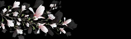 realistic flower, Magnolia branch isolated on black background. Magnolia branch-a symbol of spring, summer, femininity in the style of realism. 3d, three-dimensional red flower in a minimalist style. background for web, invitation.  Widescreen