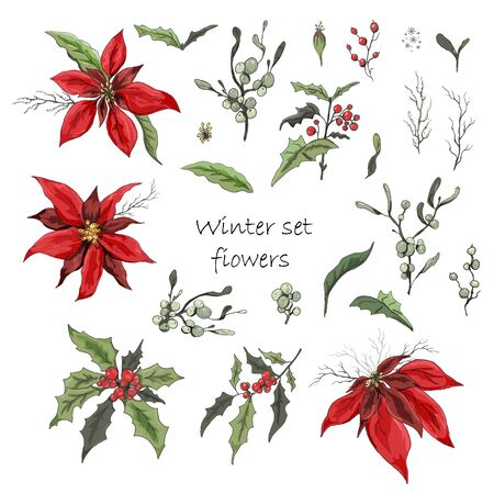 isolated flowers on white background. realistic, Botanical doodles. modern flowers (poinsettia, white mistletoe, Holly), elements for floral decoration of the winter season.