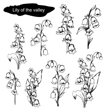 Spring set with Lily of the valley flowers. hand-drawn realistic doodling. Botanical vector illustration isolated on white background. flowers, primroses, monochrome color.