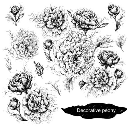 set of Botanical decorative elements. Peony flowers, leaves, stems, and buds are hand-drawn in a realistic doodling style. romantic black-and-white elements of the line. isolated objects on a white background. Vintage style.