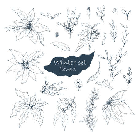 hand drawn set, isolated flowers on white background. realistic, monochrome doodles. modern flowers (poinsettia, white mistletoe, Holly), elements for floral design of the winter season. 向量圖像