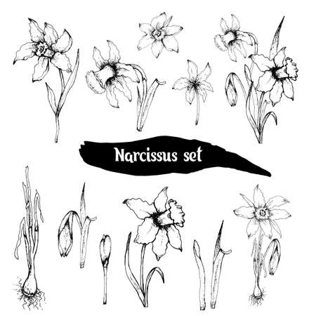 the spring set of the narcissist. flower composition, hand drawn doodling, realistic sets in black and white. bouquets, elements for decorations, Wallpaper, paper, ideas, cards, invitations.