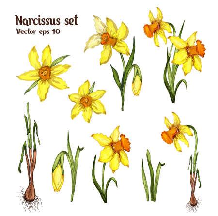 Narcissus spring set. flower arrangement, hand-drawn doodles, realistic modern color sets. bouquets, decor elements, Wallpaper, paper, ideas, cards, invitations.