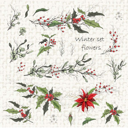 Set of winter flowers (poinsettia, white mistletoe, Holly). realistic hand-drawn branches, bouquets, colorful ornaments, decorations for seasonal cards, posters, advertising. isolated elements. Vintage style Vector Illustration