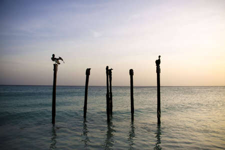 Pelicans resting on poles in the ocean while sun is setting