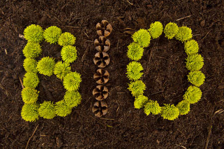 Environmental BIO written in flowers and shells on soil.