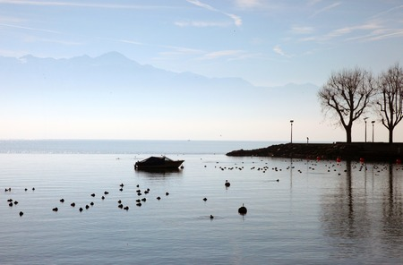 The shore of Lake Geneva in spring Standard-Bild