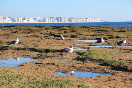 Seagulls on the shore in Cadiz, Andalusia, Spain