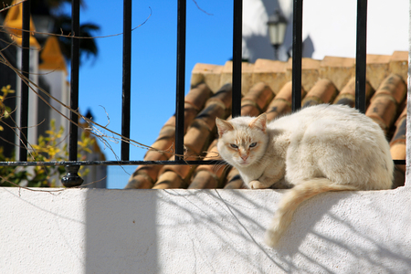 Angry street white cat in Chipiona, Andalusia, Spain