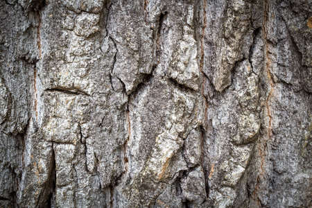 Detail view of tree bark Imagens